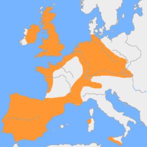 mapa vaso campaniforme